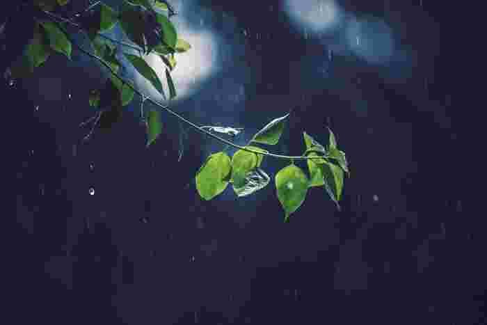 あなたの出勤場面で「憂鬱な雨」も、植物にとっては「恵みの雨」であるように、見方を変えるだけで喜びが増えたり、ネガティブがポジティブに転じたりすることがあります。これも、多角的なものの見方をしてこその収穫。