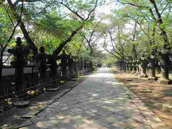参道は石灯籠と大きな木々に囲まれた中に真っすぐ伸びており、大変美しいです。大変敷地が広く、敷地内には他にも「御神木」「神楽殿」「唐門」などパワースポットや見どころがありますので、新しい年の始まりに厳かな気持ちで散歩するのもよいでしょう。