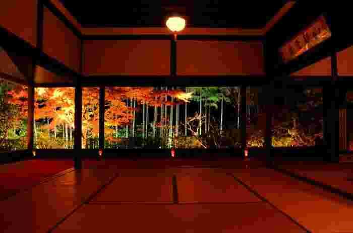 秋には夜間のライトアップも。2018年は11月3日~12月2日の期間で行われました。