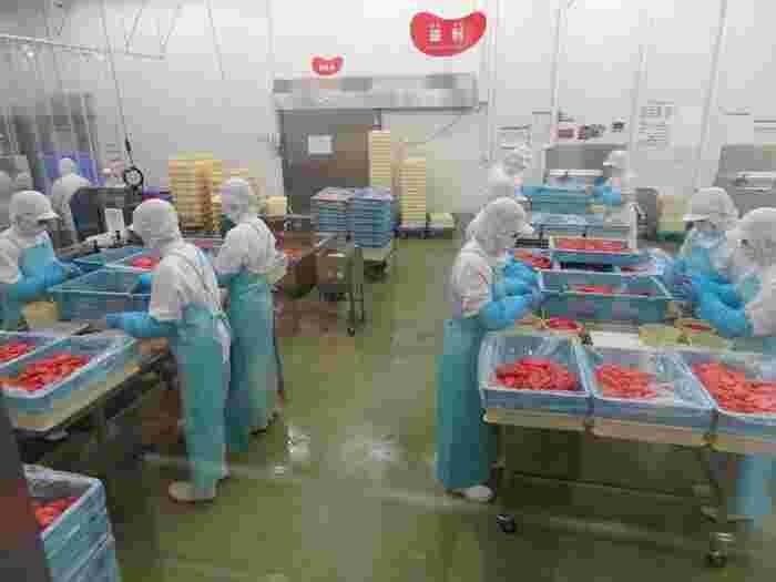 めんたいパークとこなめでは、明太子の製造工程を無料で見学することができます。