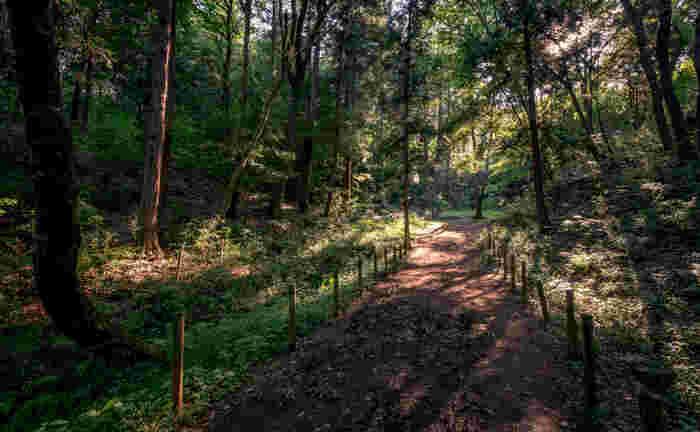 あなたも本物に会えるかも!?夏休みはトトロの森を訪れてみませんか?