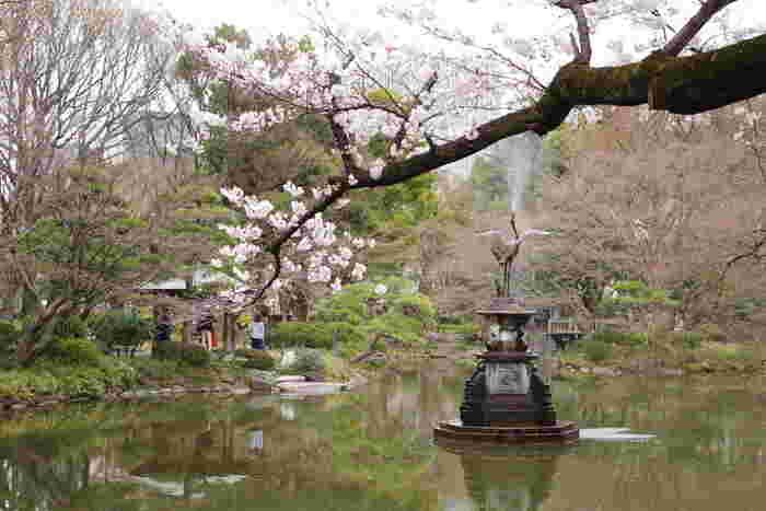霞が関、有楽町、銀座といった都心部に隣接する日比谷公園は、ビジネス街のオアシスともいえる存在で約16ヘクタールの広大な敷地を誇る都立公園です。日比谷公園では、毎年3月末から4月上旬にかけて公園内に植樹されている桜が開花します。