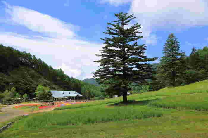 阿智村(あちむら)は、長野県の南部、岐阜県との県境にある下伊那郡の西部にあります。山間地にあり、大小の河川が流れる豊かな自然に恵まれた村です。東京から車で約4時間半、名古屋から車で約2時間と、泊りがけでのんびりと自然を満喫するには最適の場所です。