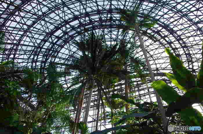 大温室内は熱帯雨林の環境が再現されているので、寒いお外とは別世界!一歩足を踏み入れると、温かな空間が広がっていてぽっかぽか。空を見上げると、天高く伸びる木々と優しい日の光が…。立ち止まって深呼吸するだけでも癒されそうです。