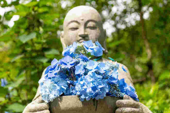 この時期の明月院には優しい表情の花想い地蔵が、紫陽花を大切に抱え見守ってくれています。優しく愛らしい眼差しにほっこり。