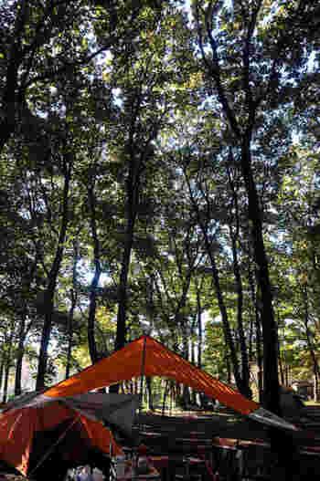 友達や家族と気軽にトリップ♪デイキャンプにおすすめの関東スポット