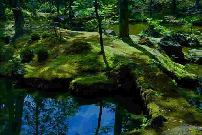 池の縁も苔で覆われて青々としています。 苔がこんなに美しいとは、思いもしませんでした。