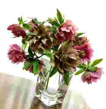 こちらのクリスマスローズは、幾重にも重なった花びらがとっても綺麗。少し色あせたような、落ち着いた色味のピンクもおしゃれな雰囲気ですね。