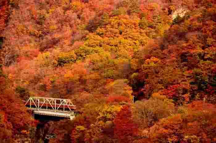 ちょっと疲れているのかな…と感じたら、「もみじ列車」を利用して、ちょっと遠出してはいかがでしょう。非日常的な錦秋の景色のなかに身をおくと、心も体も気持ちよくリフレッシュできます。  列車の車窓で愉しむオトナ贅沢な紅葉狩りは、きっと秋の思い出を特別なものにしてくれるはずです。
