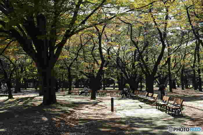 青々とした緑も美しいのですが、秋の紅葉や冬の枯れた静けさも美しい公園です。