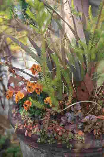 小さなお花「ビオラ」の寄せ植え。全体のトーンが統一されていて、とても落ち着いた雰囲気です。小さなお家の飾りもぴったりですね!