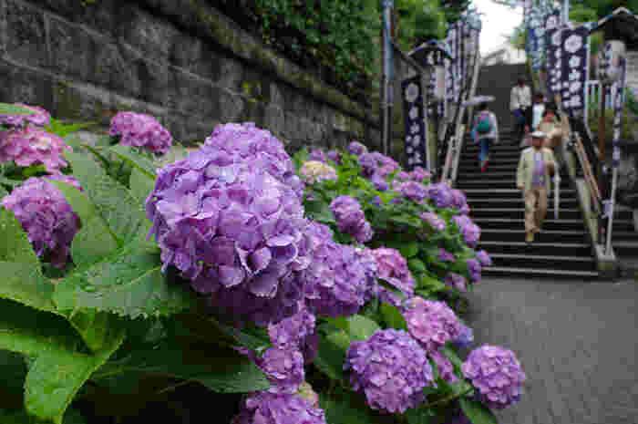東京都文京区に鎮座する白山神社は、菊理姫命(くくりひめのみこと)、伊弉諾命(いざなぎのみこと)、伊弉冊命(いざなみのみこと)を主祭神として祀る神社で、948年に創建されたものです。