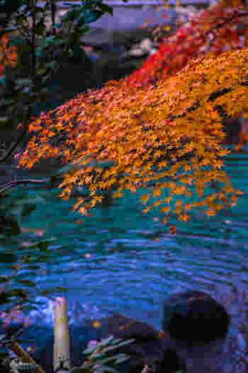 山の斜面に立つ寺院の為、境内が上下に分かれています。下の境内では紅葉や庭園、上の境内からは山と海の共演と、鎌倉らしい景色が一度に楽しめます。特に鑑賞したいのは、方丈池のほとりにある楓の木。昼は真っ赤に色づいた鮮やかな姿、夜は闇夜に浮かび上がる幻想的な姿と、昼夜通して見応えがあります。広大な敷地は、見どころ満載。ここを中心に、鎌倉散策の予定を立ててみるのも良さそうです。