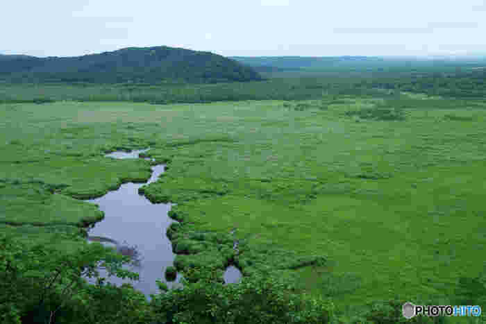 湿原にはいくつか展望台があり、広大な湿原を一望することができます。ここが日本だなんて信じられないスケール!