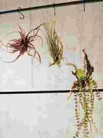空間を素敵に演出してくれるハンギングプランツも人気ですね。でも、本物の植物を吊るすとなると、お手入れが大変…。フェイクグリーンならお世話入らずなので、気軽に吊るして楽しめます。