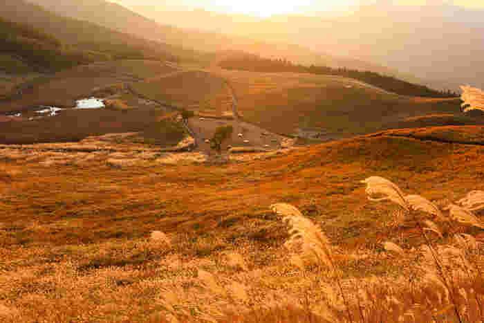 曽爾高原での夕景の美しさは傑出しています。沈みゆく夕陽、陽射しを浴びて金色に輝くススキの穂が織りなす景色は、絶景そのものです。