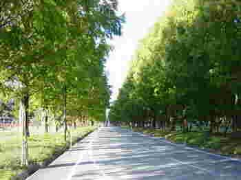 新緑・深緑・紅葉・着雪など、四季折々の美しい木々が楽しめるまっすぐな一本道です。
