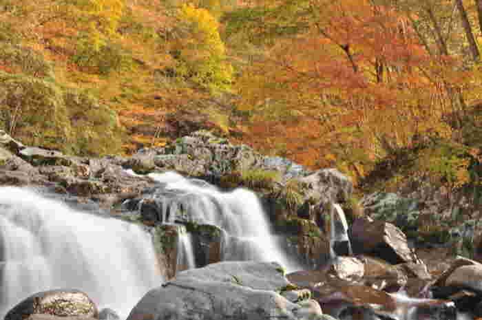 飛騨せせらぎ街道の沿線沿いには、秋になると鮮やかに色づく落葉樹の森に包まれた大小様々な河川、渓流があります。鮮やかに色づいた落葉樹の森、白いしぶきを散らして岩肌を流れ落ちる滝、心地よい高原の空気が織りなす美しい景色は、車で通り過ぎてしまうのはもったいないと感じてしまうほどです。