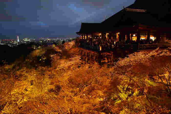 【清水寺のライトアップ。清水寺では「夜の特別拝観」が、春・夏・秋に行われています。】