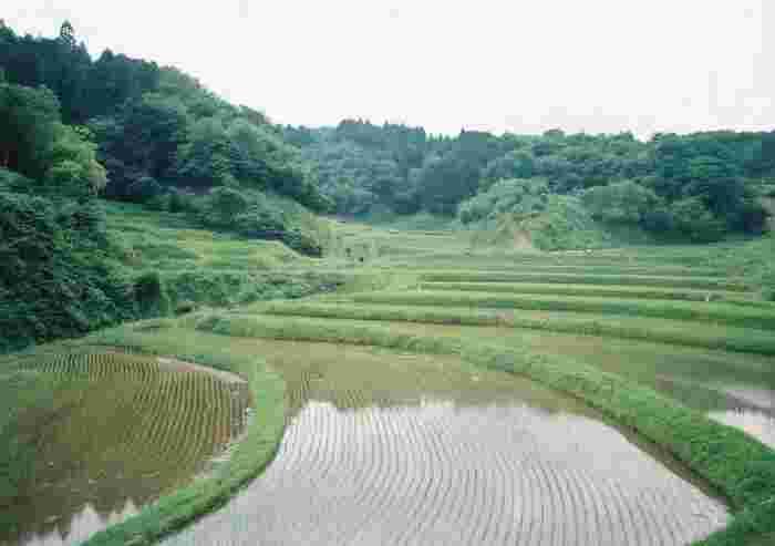 平成11年に「日本の棚田百選」に認定された石畑の棚田では、約2.4ヘクタールの敷地に180枚の水田が敷かれています。