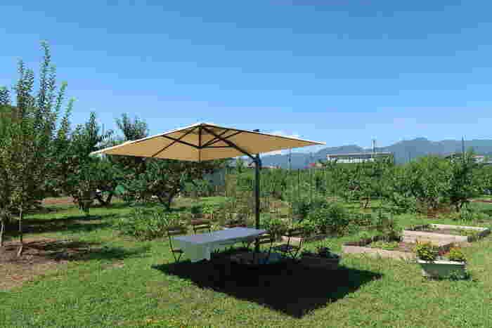 お食事は、テラス席か広場のパラソルの下で。桃畑を渡る風を感じながら頂きましょう♪