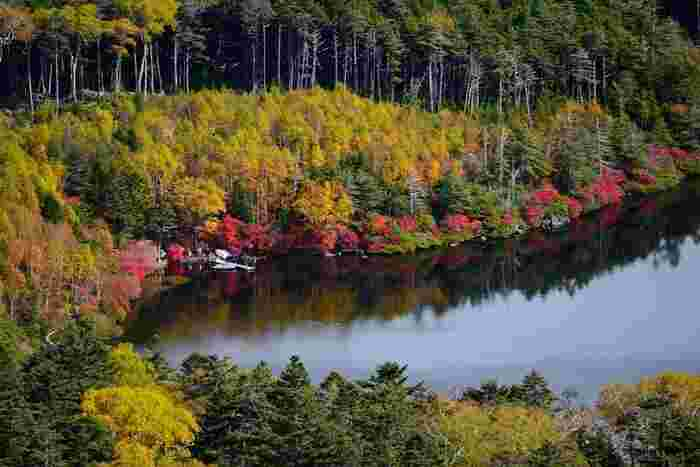高見石から望む白駒池。