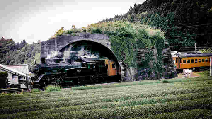 蔦に覆われた「日本一短いトンネル」は、のどかな田園風景に忽然と現れるトンネルで、山間部をくりぬかれた一般的なトンネルではありません。かつて、川根策道というロープウェイがこのトンネルの上空で運行されていました。日本一短いトンネルは、鉄道に物が転落することを防ぐ目的で造られた鉄道の屋根のような役割を果たしていました。