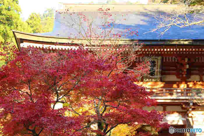 豊かな自然が残された鞍馬山の紅葉と、幽玄閑寂とした佇まいの鞍馬寺境内が織りなす景色は、まるで絵画のような素晴らしさです。