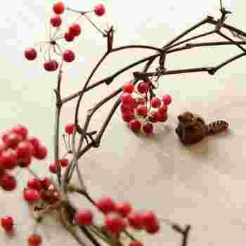 クリスマスの飾り付けでよく見るサンキライ。小さな赤い実がとってもかわいいですね。サンキライを入れるだけでクリスマスらしさがアップします。