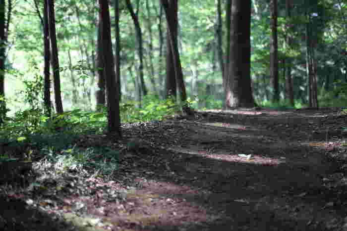 東村山市と所沢市にまたがる淵の森は、宮崎駿監督が散策しながらトトロの構想を練った場所だそうです。 監督は宅地開発にさらされた際に自ら3億円もの寄付を投じ、さらに守る会の会長にもなりこの森の保全に努めています。
