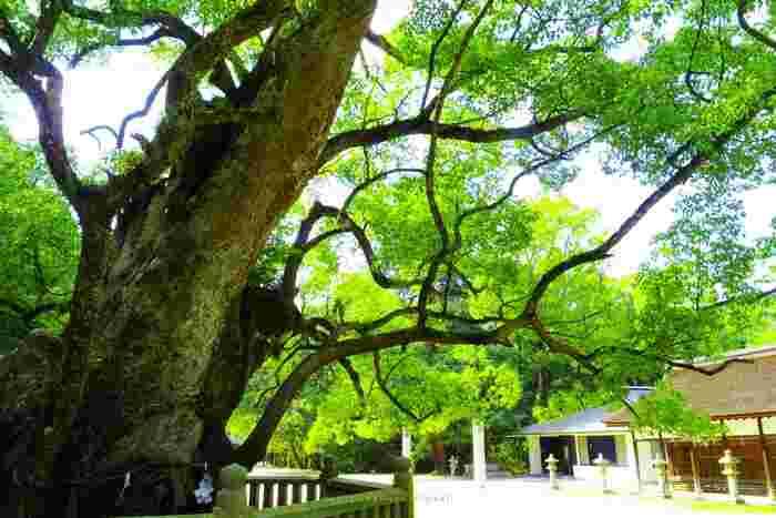 神社には御神木をはじめ自然が多いので、最近緑に触れ合ってないなという時にもオススメです。最近なんだか元気が出ないかも、と感じる時は、神社で心も体もパワーチャージしてから出社しましょう。