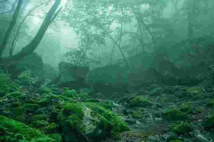 秩父多摩国立公園内にある御岳山は、野鳥、昆虫、小動物、植物の宝庫であり豊かな自然が残されています。山頂へ続くハイキングコース道には、苔に覆われた杉の巨木など豊かな森が広がっています。