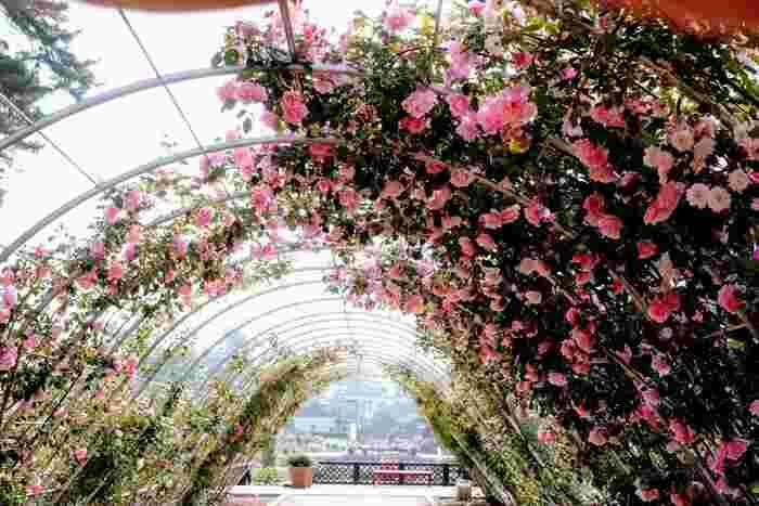 バラのアーチがあるエリアでは、バラの香りに包まれながらお散歩やバラの撮影が楽しめます。敷島公園はバラ以外の季節にも、梅やしだれ桜、河津桜などが楽しめ、季節の移り変わりも感じられる人気スポットです。