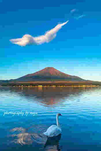 富士五湖最大の面積と最高の湖面標高の山中湖。水深は富士五湖の中で一番浅く、寒さが厳しい時には全面結氷することもあります。また、白鳥が毎年冬を越す国内最南端の場所であり、冬場には湖を優雅に散歩する白鳥も見られます。周辺には「山中湖文学の森公園」や「花の都公園」などの観光スポットがあります。