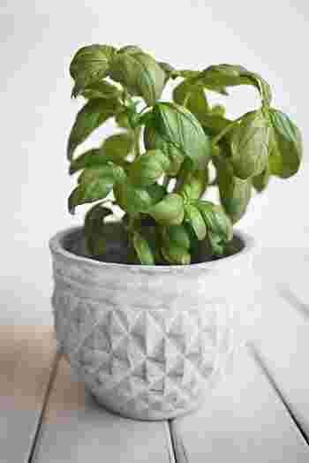 【育て方】1辺が3〜5センチ角になるように、水栽培用のスポンジをカットします。表面に十字の切れ込みを入れ、水の張ったタッパーにスポンジを敷き詰め、水を染み込ませます。切れ込みに、バジルの種を2〜3粒まきます。水を毎日取り替えながら発根をまちましょう。根が10センチ、茎が4センチほど生長したら、水栽培用の容器に移し替えましょう。 【育て方のコツ】水は毎日取り替えて、きれいな状態を保ってくださいね。水を替える際に、肥料もすこし与えておきましょう。肥料がすくないと、葉が黄色くなってしまいます。水の量は、根が完全に浸ってしまわないように注意しましょう。外に出すと、虫が湧くことがあるので、できるだけ室内で管理するようにしましょう。