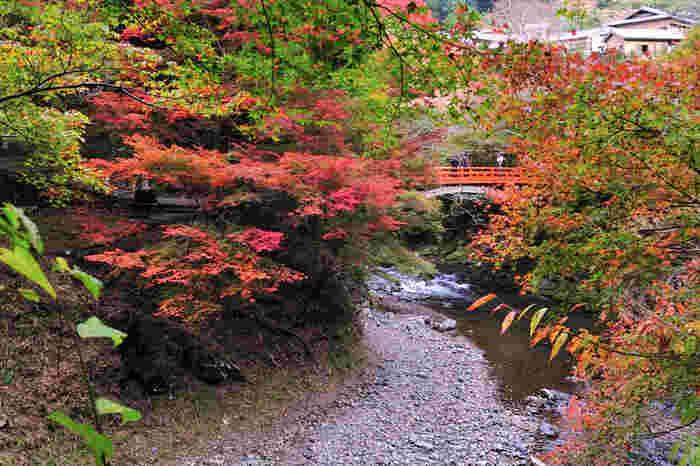 四季折々で美しい姿を見せてくれる清滝川沿いに広がる渓谷の美しさは格別です。心地よいせせらぎに耳を傾けながら、鮮やかに彩った落葉樹を眺め、清滝川周辺を散策してみてはいかがでしょうか。