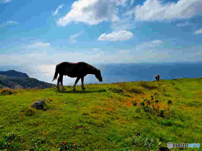 放牧されている馬や牛が、悠々と草を食む光景が見られる西ノ島町。複雑に隆起する山の起伏は、かつての海底火山のカルデラ跡です。芸術的でダイナミックな景観に吸い込まれてしまいそう。