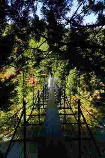 廃線跡を通り過ぎると、井川湖周辺の景勝地、夢の吊り橋に差し掛かります。その高さと揺れはスリル満点。少し怖い気持ちもしますが、せっかくなので橋の上からの景観を楽しみましょう。