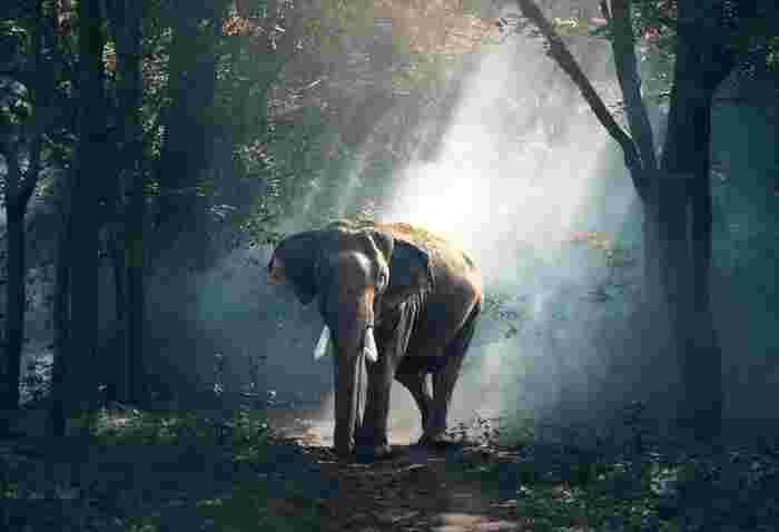 動物プロダクションの家業の息子、テツ。学校でいじめられ心に陰りを秘めつつ、両親を手伝い動物たちの世話をしながらく暮らしています。そんなある日、母が長年の夢だった象を迎え入れることに。1頭目のミッキーに続き2頭目のランディもやってきて、世話をする中でテツは象使いになりたいと思うようになります。