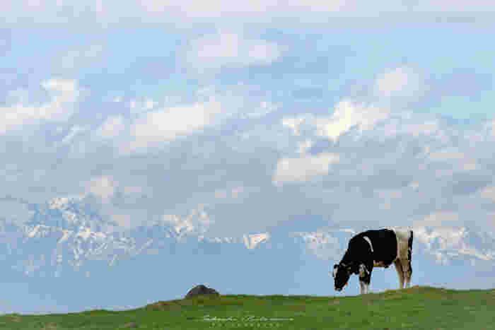 「美ヶ原高原」という呼称は、前述したいくつかのピークを含む台地のこと言い、江戸中期の「信府統記」には「美ヶ原」の記述があったそうで、「美ヶ原」と広く呼ばれはじめたのは大正時代のころからと言われています。