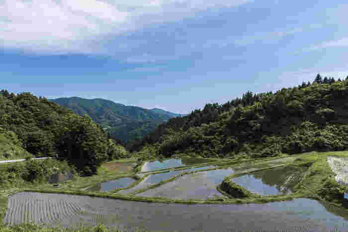 総面積約4.1ヘクタールの沢尻棚田は、1999年に「日本の棚田百選」に選定された棚田です。この棚田は、江戸時代から昭和初期にかけて形成されたもので、傾斜地に住む人々がつくり出した知恵と苦労の結晶でもあります。