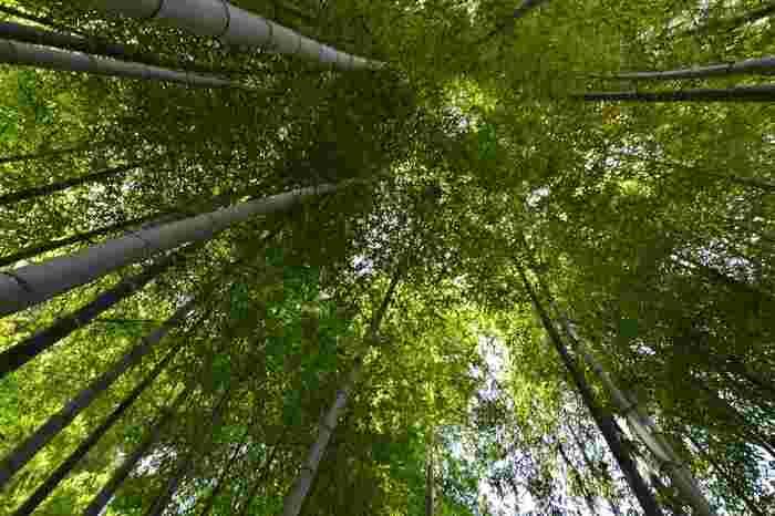 新緑の季節は見上げると、緑鮮やかな竹林があり、都会では味わえない森林浴をすることができます。静寂な竹林で深呼吸すれば、普段の小さな悩みも吹き飛んでくれます。