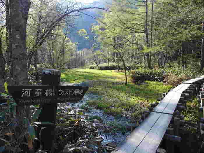 自然豊かな上高地は、河童橋からの景色や梓川の透き通った流れを眺めるだけでも充分楽しむことができますが、自分の脚で自然を堪能するハイキングがおすすめですよ。  今回は、1時間程度の軽く歩けるハイキングコースから、本格的なハイキングコースまで幅広いコースをご紹介。体力に合わせてコースを選ぶことができるので、観光スポットに立ち寄りながら、上高地の自然を体全体で感じてみてくださいね。  <上高地のおすすめハイキングコース> *記事記載の時間はすべて目安となります  軽めに歩きたい方 ・大正池コース(歩行時間 約1.5時間) ・明神池コース(歩行時間 約2時間)  本格的なハイキングをしたい方 ・徳沢往復コース(歩行時間 約4時間)  登山経験者の方はこちらも ・涸沢、焼岳(歩行時間 約6時間~)