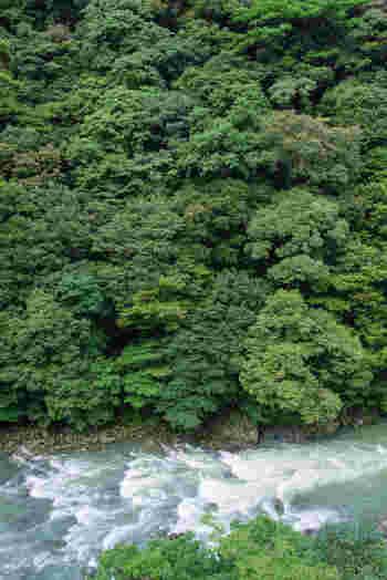 深い渓谷となっている綾の照葉樹林は、渓谷中心部に綾川が流れており、「綾渓谷の照葉樹林」とも呼ばれています。清流と渓谷が織りなす景観美から、この地は「名水百選」「21世紀に残したい日本の自然百選」「森林浴の森百選」に選定されています。
