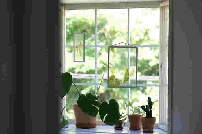 クリアフィルムにプリントされたボタニカルポスターです。フレームの中に植物を閉じ込めたような不思議なアートは、光を通すので窓辺に飾るとまるで宙に浮いているよう。サイズや植物の種類もさまざま。裏・表、上下左右、自由に飾って楽しめます。植物のお世話が苦手な方でも、これなら気軽に取り入れられそうですね。