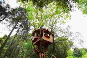 予約をすればこんな素敵なツリーハウスにも宿泊可。