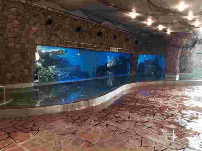 そして、ハトヤを訪れたらぜひ体験したいのが、CMでもおなじみの海底温泉「お魚風呂」。巨大な水槽の中で泳ぐウミガメや魚を眺めながら、のんびり浸かる温泉は格別ですよ。