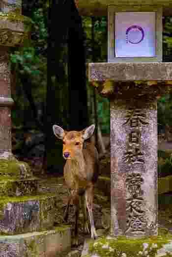近年では奈良にはおいしいお店がどんどん増えてきていて、2011年のミシュランの会見でも「奈良にうまいものあり」との発言が出るほど。 そんな奈良の一番の観光名所、東大寺・奈良公園周辺のおいしくておしゃれなカフェをご紹介します。