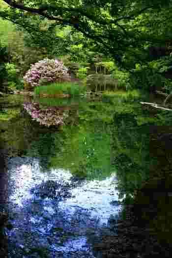 ご存じ三四郎池。お食事の後は、緑ゆたかな構内を散策しては。