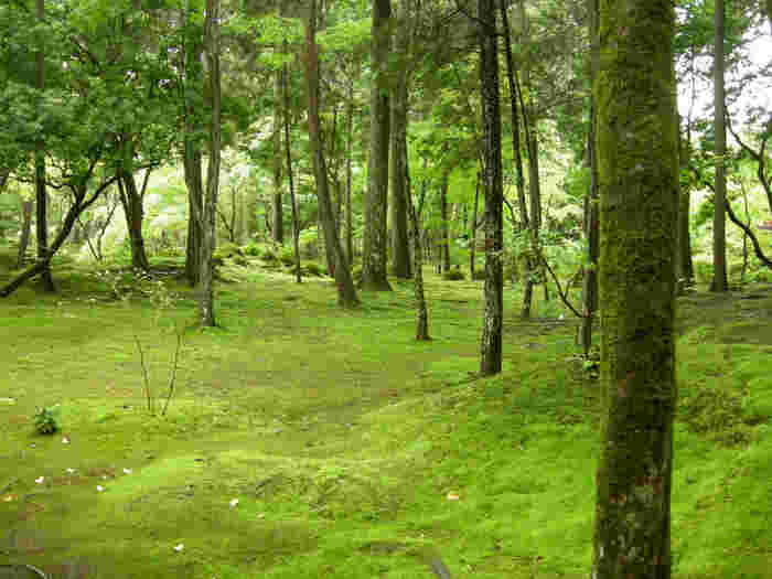 地面だけでなく木々も苔に覆われて、幽玄な雰囲気。 雨がしとしと降っていれば、更に雰囲気UPでしょうね。